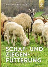 Schaf- und Ziegenfütterung